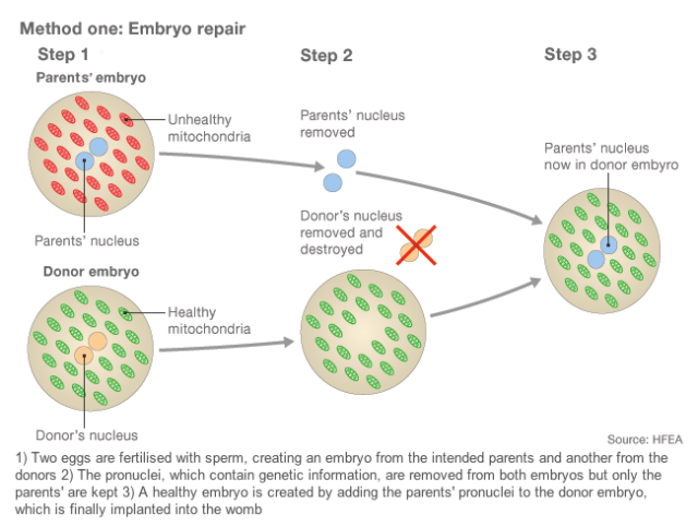 Method 1 - Embryo Repair (BBC)