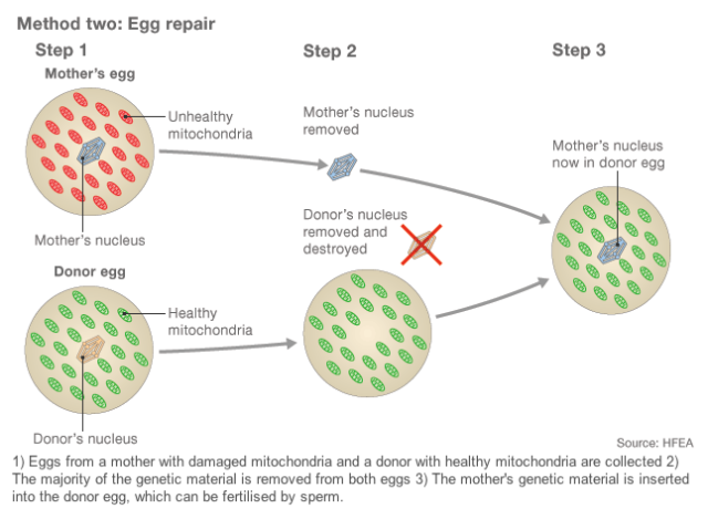 Method 2 - Egg Repair (BBC)